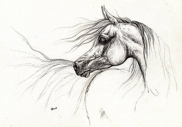 Arabian Drawing - Arabian Horse Drawing 2013 09 13 by Angel Ciesniarska
