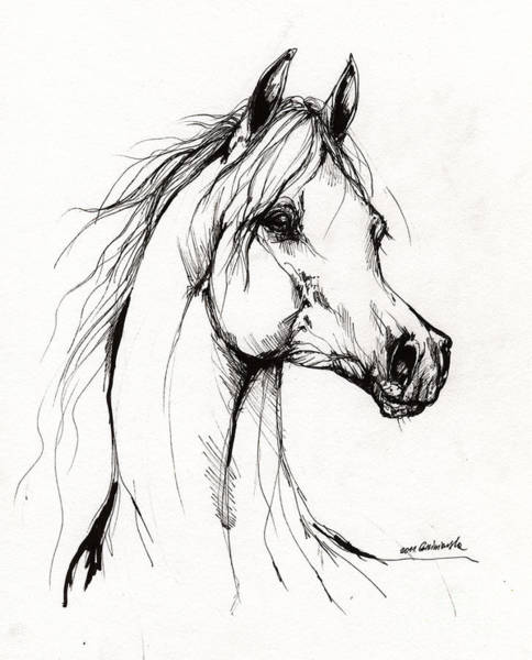 Arabian Drawing - Arabian Horse Drawing 38 by Angel Ciesniarska