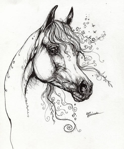 Arabian Drawing - Arabian Horse Drawing 9 by Angel Ciesniarska