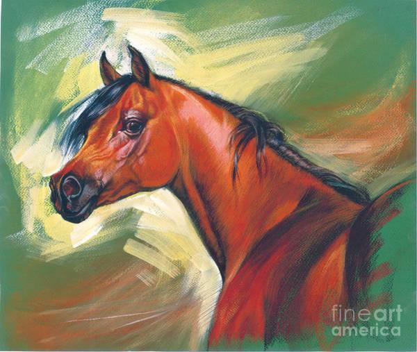 Maine Digital Art - Arabian Horse by MGL Meiklejohn Graphics Licensing