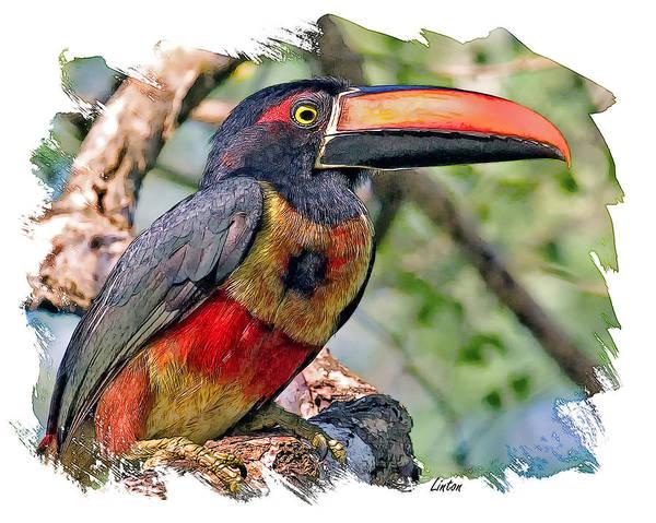 Digital Art - Aracari by Larry Linton