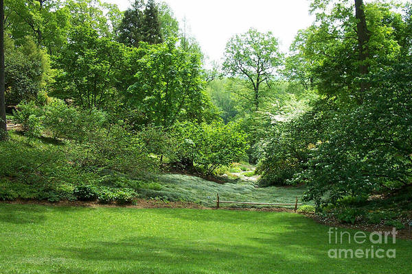 Photograph - Arbor Glen 2 by Walter Neal