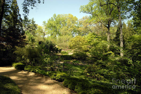 Photograph - Arbor Glen 1 by Walter Neal