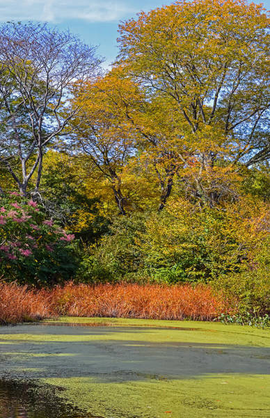 Photograph - Arboretum Autumn 1 by Robert Mitchell