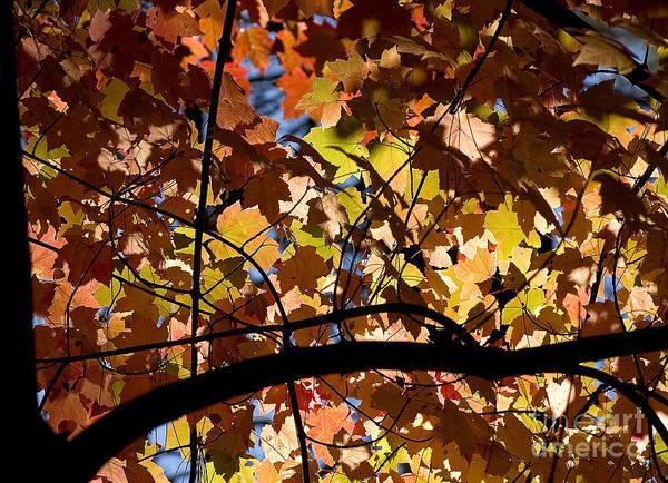 Photograph - Arboretum Fall by Steven Ralser