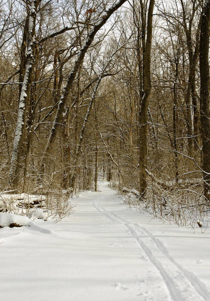 Photograph - Arboretum Trail - Madison - Wisconisn by Steven Ralser