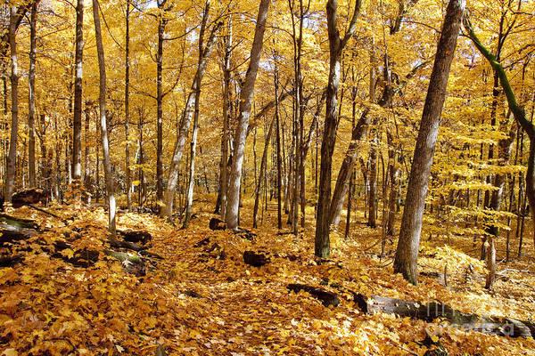 Arboretum Trail Art Print