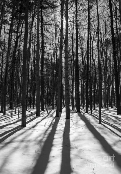Photograph - Arboretum Trees by Steven Ralser