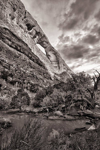 Wall Art - Photograph - Arch Tree And Pond by Juan Carlos Diaz Parra