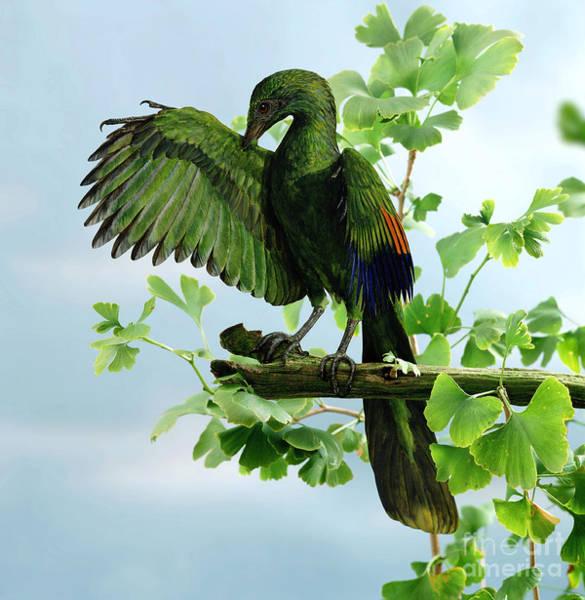 Photograph - Archaeopteryx by Jane Burton