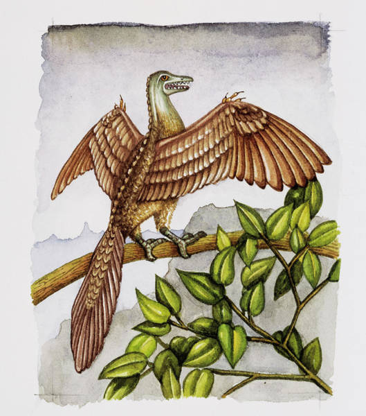 Wall Art - Photograph - Archaeopteryx by Lizzie Harper