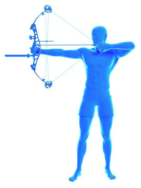 Archery Photograph - Archer by Sebastian Kaulitzki/science Photo Library