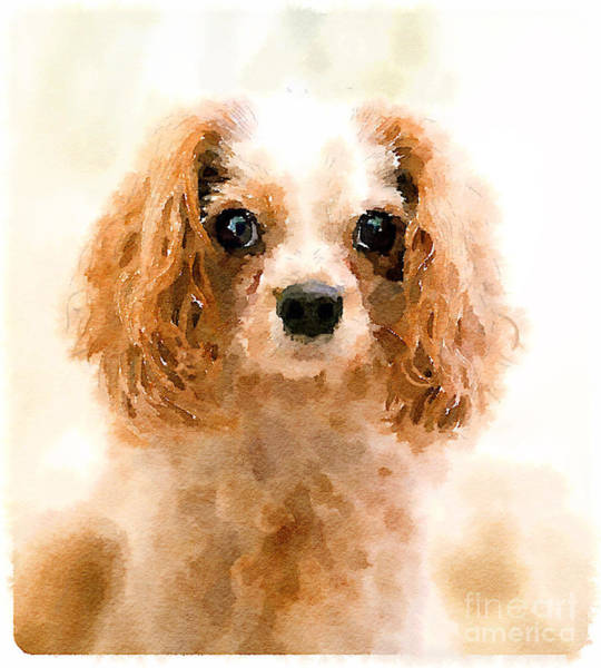 Sweet Puppy Photograph - Archie Watercolour by Jane Rix