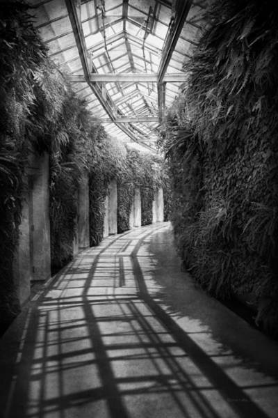 Photograph - Architecture - The Unchosen Path - Bw by Mike Savad