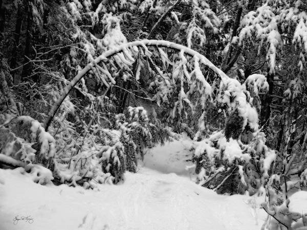 Photograph - Archway On Smarts Brook by Wayne King