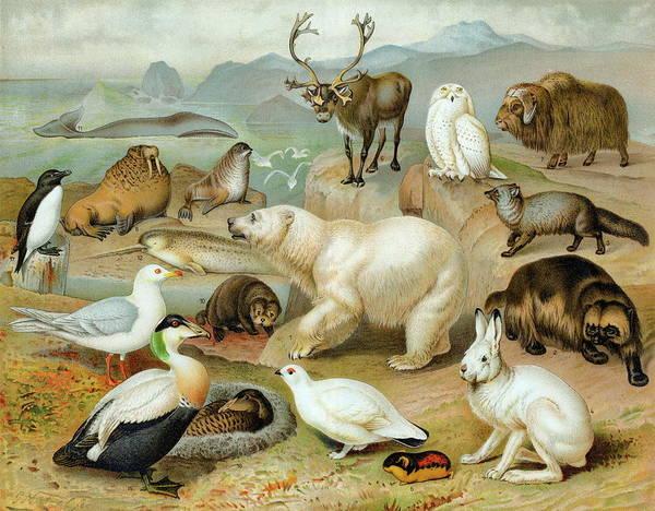 Wall Art - Photograph - Arctic Fauna by Cordelia Molloy/science Photo Library