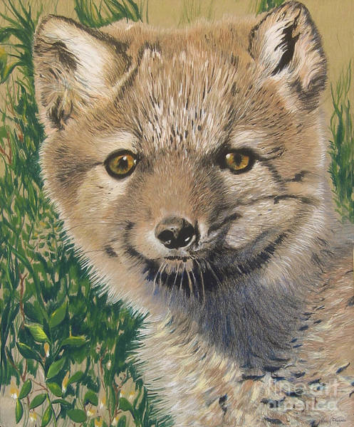 Drawing - Sold Arctic Fox by Nancy  Parsons