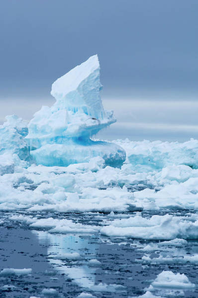 Ice Floe Photograph - Arctic Sea Ice by Louise Murray/science Photo Library