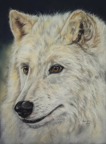 Arctic Wolf Painting - Arctic Wolf by Christina Frenken