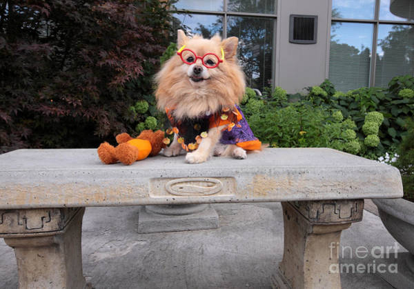 Dog Treat Photograph - Are You Ready For Trick And Treat by Charline Xia