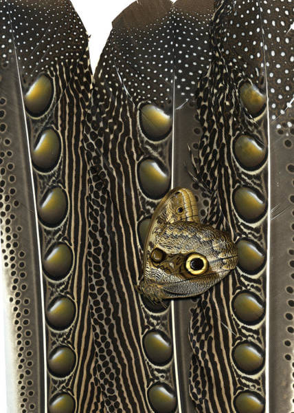 Wall Art - Mixed Media - Argus Owl Butterfly by Chris Maynard