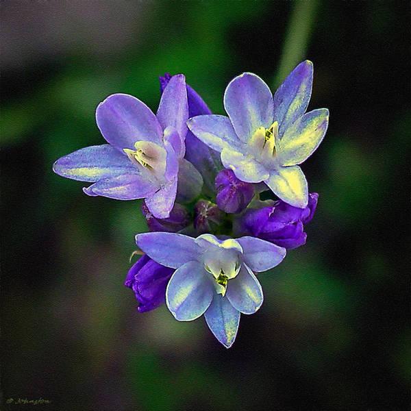Photograph - Arizona Bluedick Wildflower by Bob and Nadine Johnston