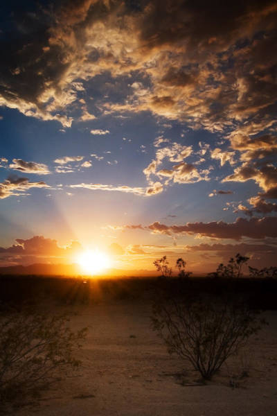 Photograph - Arizona Desert Sunset by Brad Brizek