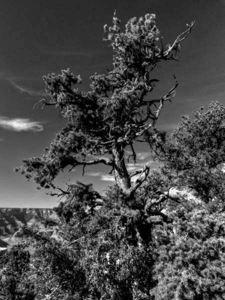 Photograph - Arizona - Grand Canyon 009 by Lance Vaughn
