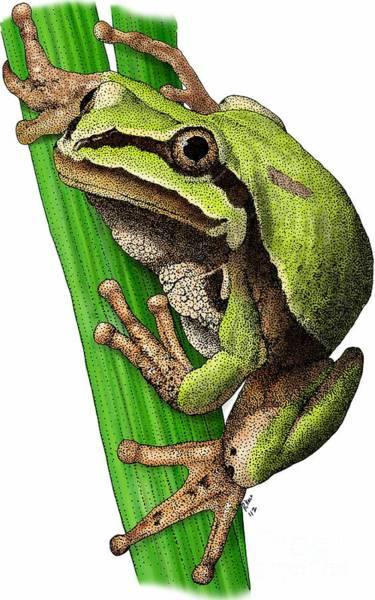 Photograph - Arizona Tree Frog by Roger Hall