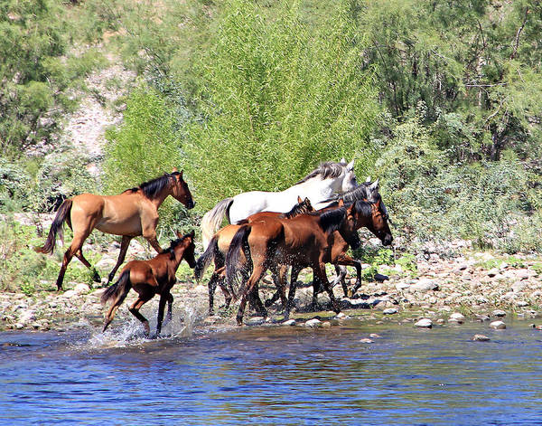 Photograph - Arizona Wild Horse Family by Matalyn Gardner