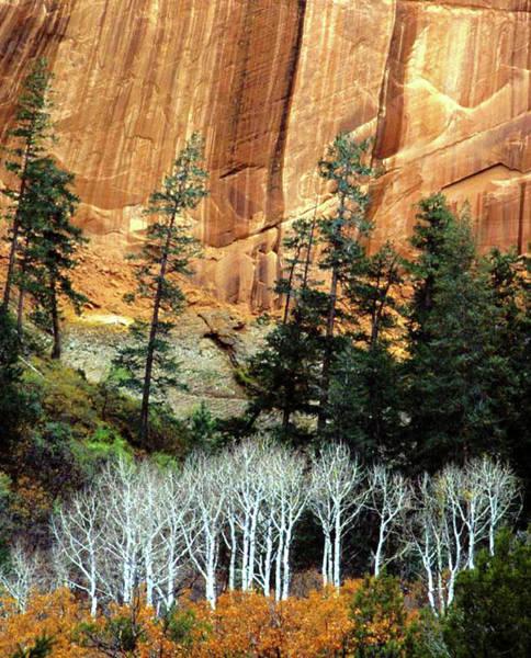 Desert Varnish Photograph - Arizona's Betatkin Aspens by Ed  Riche