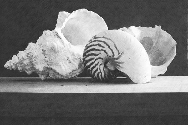 Wall Art - Photograph - Arrangement Of Seashells by Frank Wilson