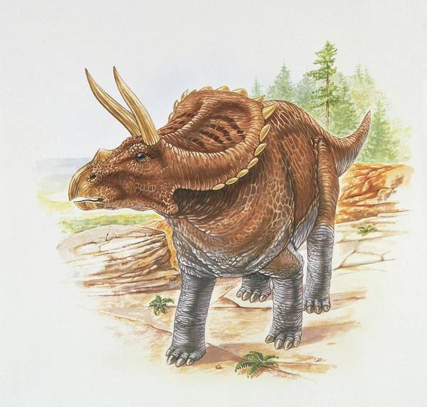 Cretaceous Wall Art - Photograph - Arrhinoceratops by Deagostini/uig/science Photo Library
