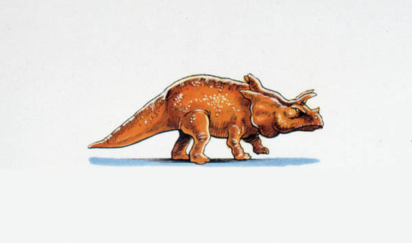 Canadian Fauna Photograph - Arrhinoceratops Dinosaur by Deagostini/uig