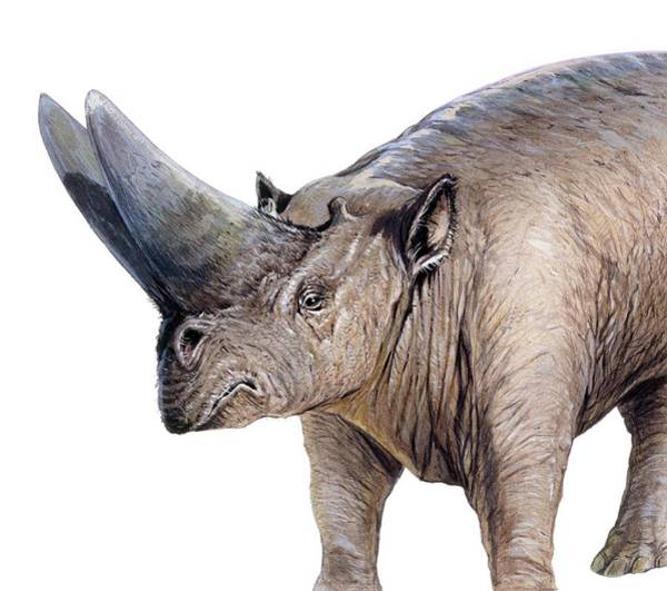 Wall Art - Photograph - Arsinoitherium by Michael Long/science Photo Library