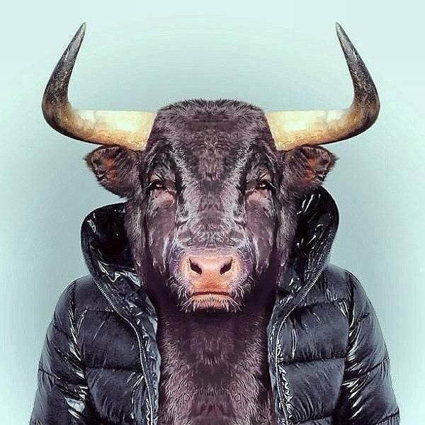 Wall Art - Photograph - Art Bull by Marina Boitmane