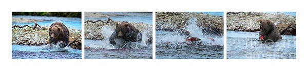 Photograph - Art Of Catching Salmon  by Dan Friend