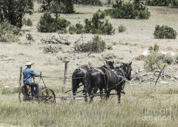 Crazy Horse Photograph - Art Of Horse Plowing by Janice Pariza