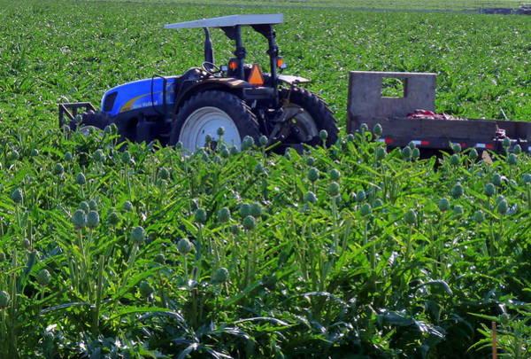 Photograph - Artichoke Field And Tractor by Jeff Lowe