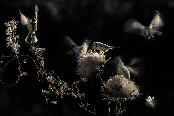 Flying Bird Photograph - Artichokes Hearts by Martine Benezech