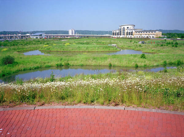 Cardiff Photograph - Artificial Wetland Habitat by Robert Brook/science Photo Library