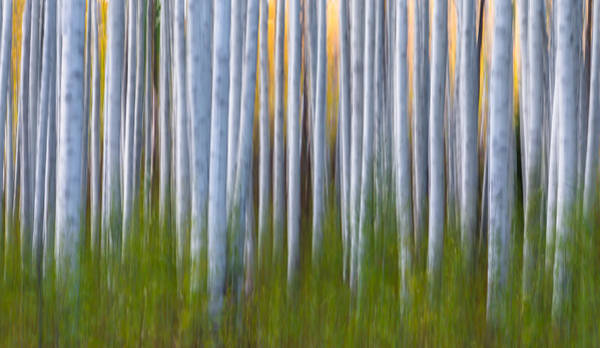Wall Art - Photograph - Artistic Aspens 2 by Larry Marshall