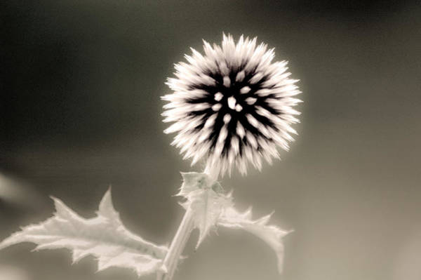 Don Johnson Photograph - Artistic Black And White Flower by Don Johnson