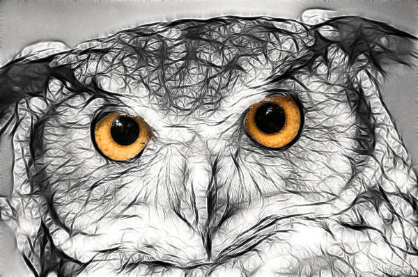 Photograph - Artistic Great Horned Owl by Don Johnson