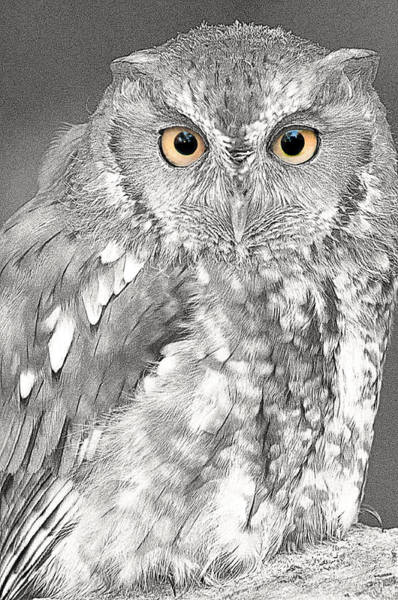 Photograph - Artistic Red Screech Owl by Don Johnson