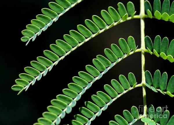Photograph - Artsy Green by Sabrina L Ryan