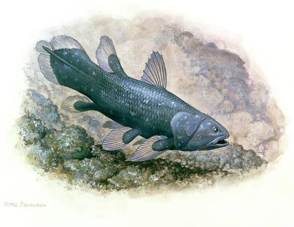 Artwork Of A Coelacanth Fish Art Print