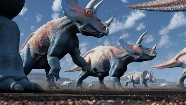 Wall Art - Photograph - Artwork Of A Herd Of Triceratops by Mark Garlick/science Photo Library