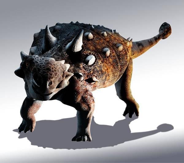 Canadian Fauna Photograph - Artwork Of Euoplocephalus Dinosaur by Mark Garlick/science Photo Library
