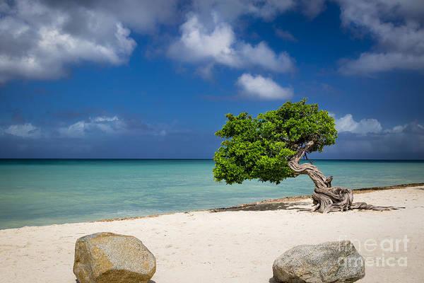 Photograph - Aruba Beach Tree by Brian Jannsen
